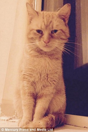 Chavvy Cat Foster Carer Claims Cat Has A Severe