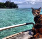Amelia on board - A Ship's Cat