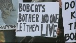 Protest over decision to recommence limited Bobcat hunting in NH