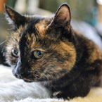Tilly a 24-year-old rescue cat rejected tens of thousands of times