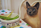 Feline veggy diet Photo credit: Flickr User: appaloosa