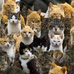 Overpopulation of cats