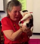 Teacher given gift of rescue kittens