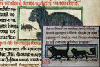 Black cats 12th century