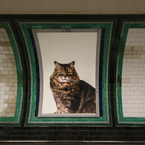 Cat posters on London Underground