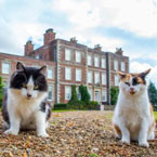 Posh cats of stately homes