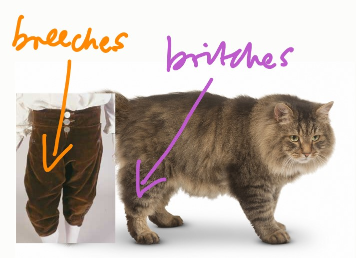 Britches on a cat