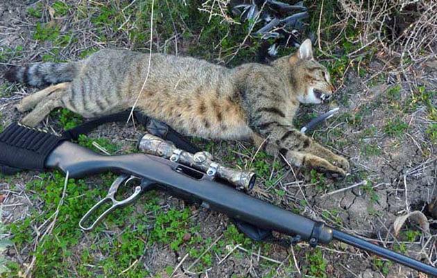 Rescue Cats South Australia