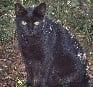 Feral cat Texas