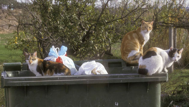 UK feral cats