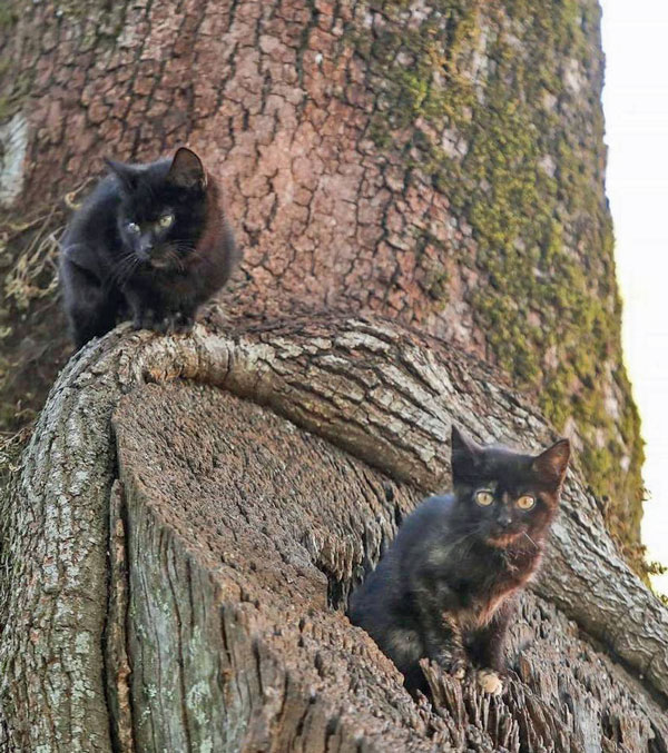 Feral kittens living in a tree