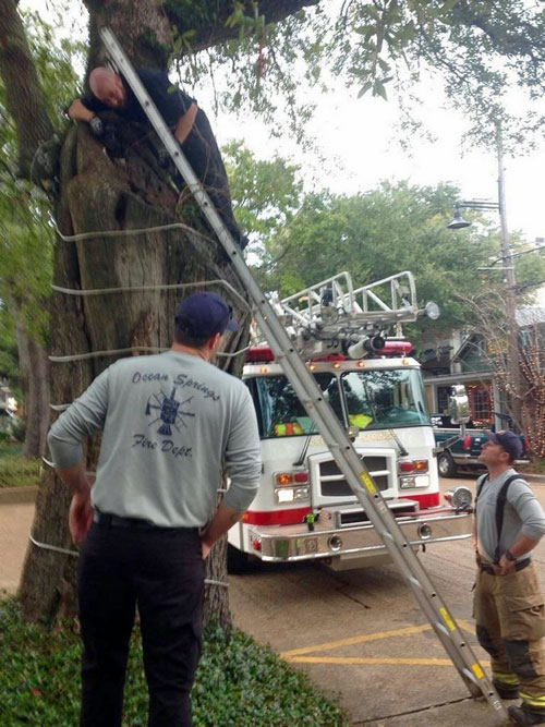 Firefighters try and rescue the kittens