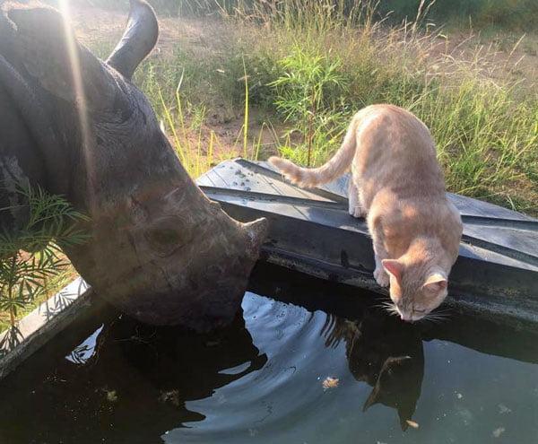 Rhino and cat