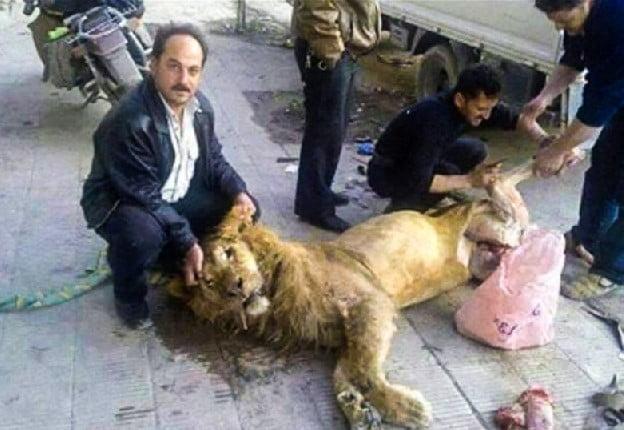 Venezuelans eating zoo animals