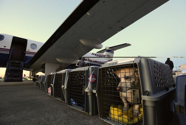 Air transport animal rescue