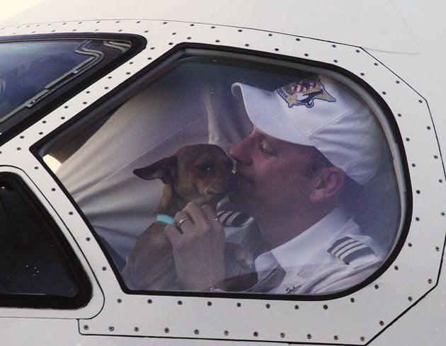 Air transport animal rescue