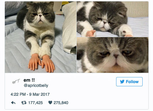 Cat with human hands