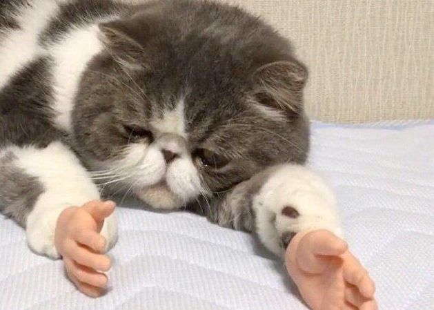 Cat With Human Hands Divides the Internet
