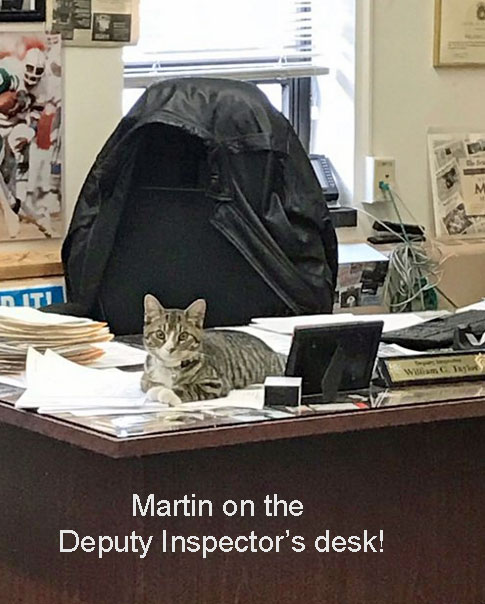 Martin a police station cat