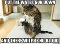 Water pistol used on cat