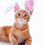 Top Easter Cat Hazards