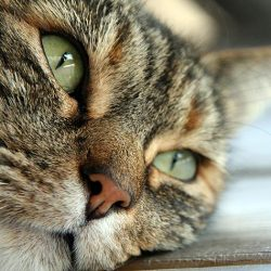 How Many Dogs And Cats Are Euthanised In Australia