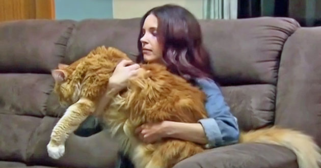 Huge Australian Maine Coon is probably world's longest domestic cat