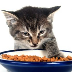 Should cats eat small meals often?