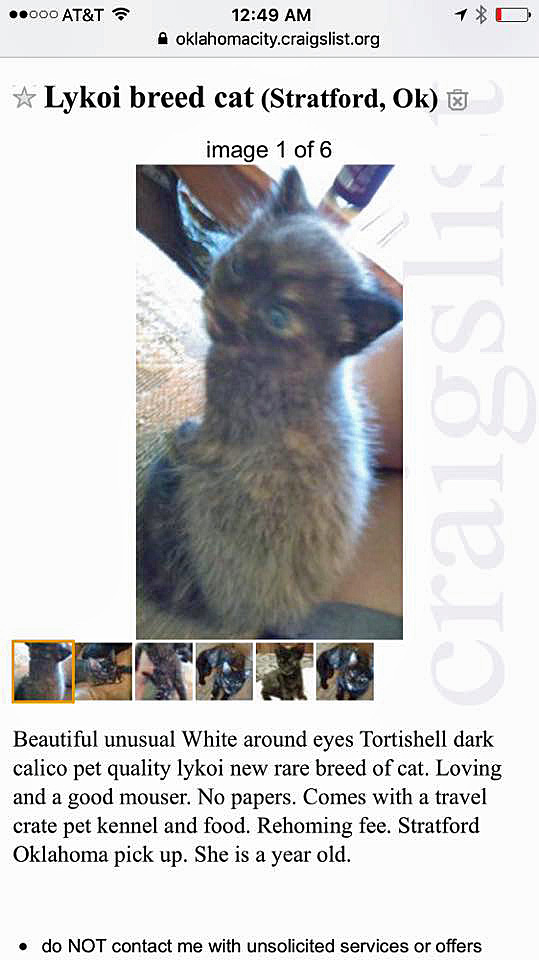 Watch out for the Lykoi cat scam on Graigslist