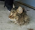Cat's head sticks out of concrete floor
