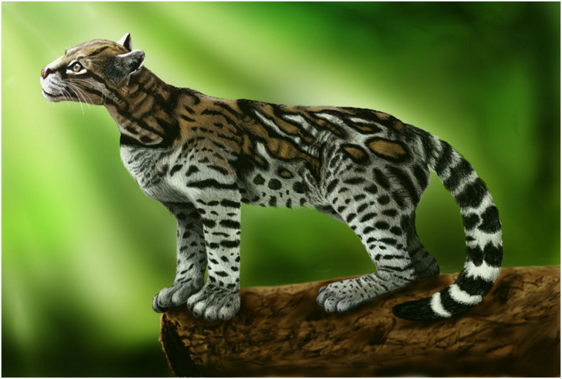 What do ocelots weigh?
