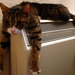 What room temperature do cats prefer?