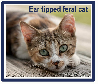TNR'ed and vaccinated feral cat gets rabies and bites person