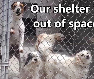 Short video saves the lives of cats and dogs