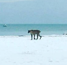 Mystery cat on beach
