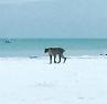 Mystery cat on beach