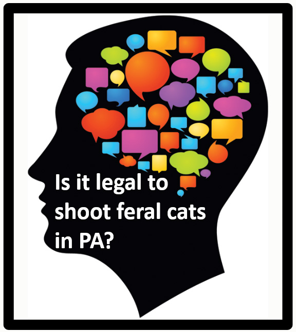 Is it legal to shoot feral cats in PA?