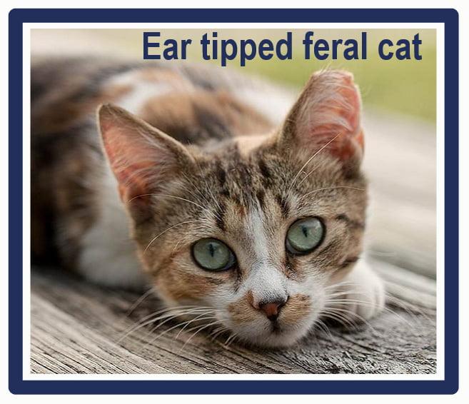 how to catch a feral cat in a trap