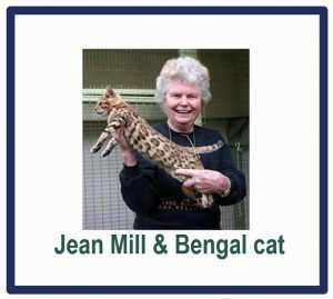 The bengal cat should not have been created