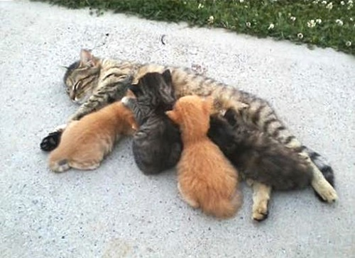 How Far Will A Mother Cat Move Her Kittens