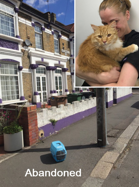 Abandoned cat on sidewalk rescued moments later
