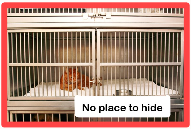Cats need places to hide in shelter cages