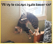 Cats are Houdini escapologists