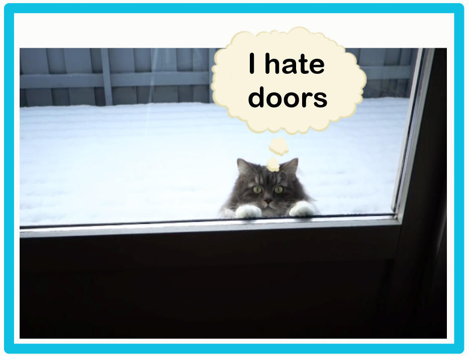 Cats hate doors