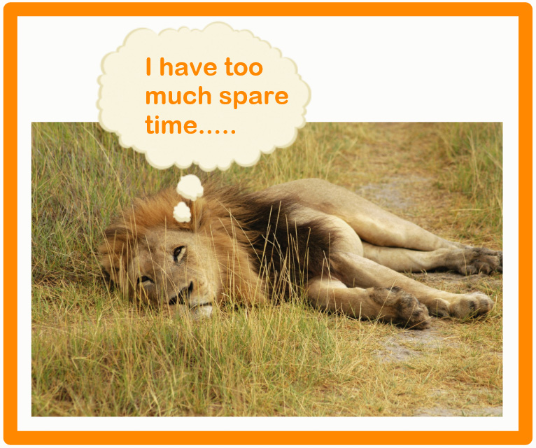 What do lions do in their spare time?