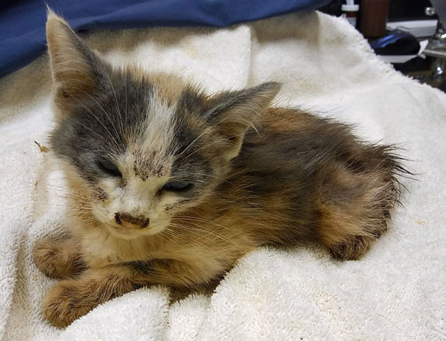 Kitten rescued from house of abandoned cats and kittens
