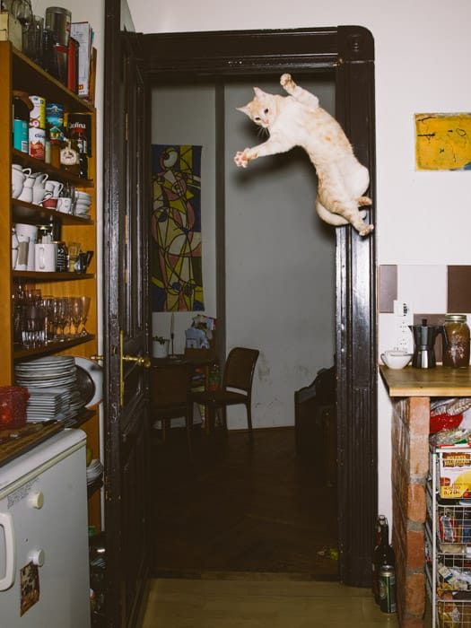 """Jumping Cats"" - Photos by Daniel Gebhart de Koekkoek"