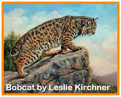 Bobcat by Leslie Kirchner