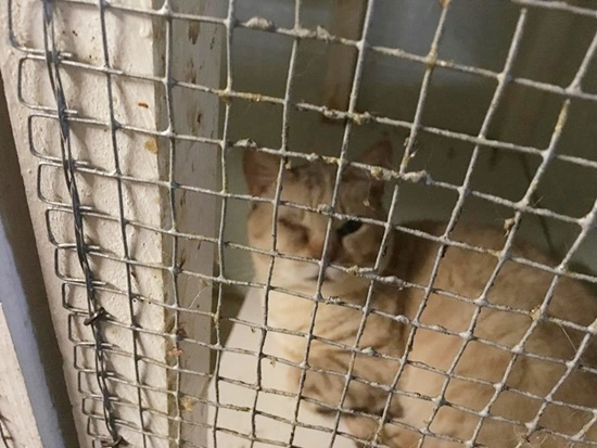 Cat in cage at breeders