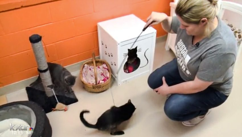 Keeping FeLV positive rescue cats alive at new homes